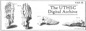Digital Archives Banner - Benardino Genga Anatomy